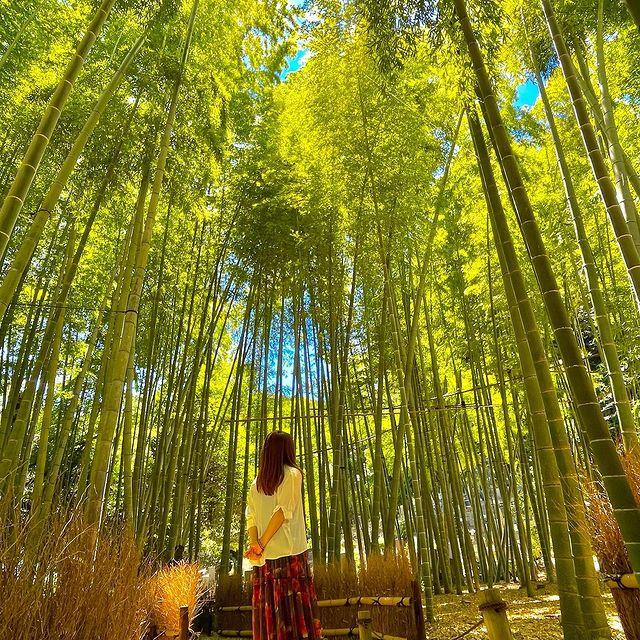 鎌倉 報国寺の竹林 素敵な写真  はなさんInstagram更新の画像